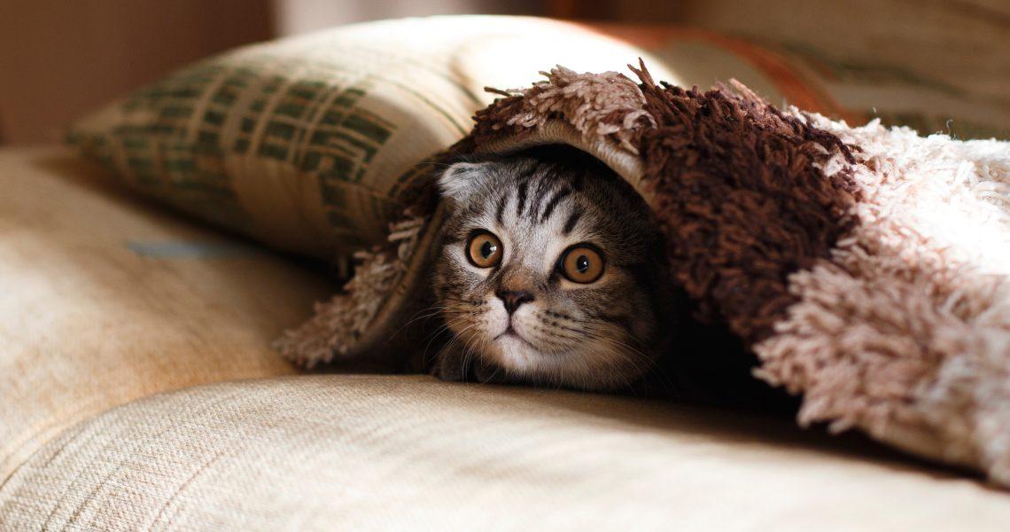 Nu-ți lăsa pisica să citească asta! O să afle cum faci bani pe seama ei (și-o să-ți ceară partea)