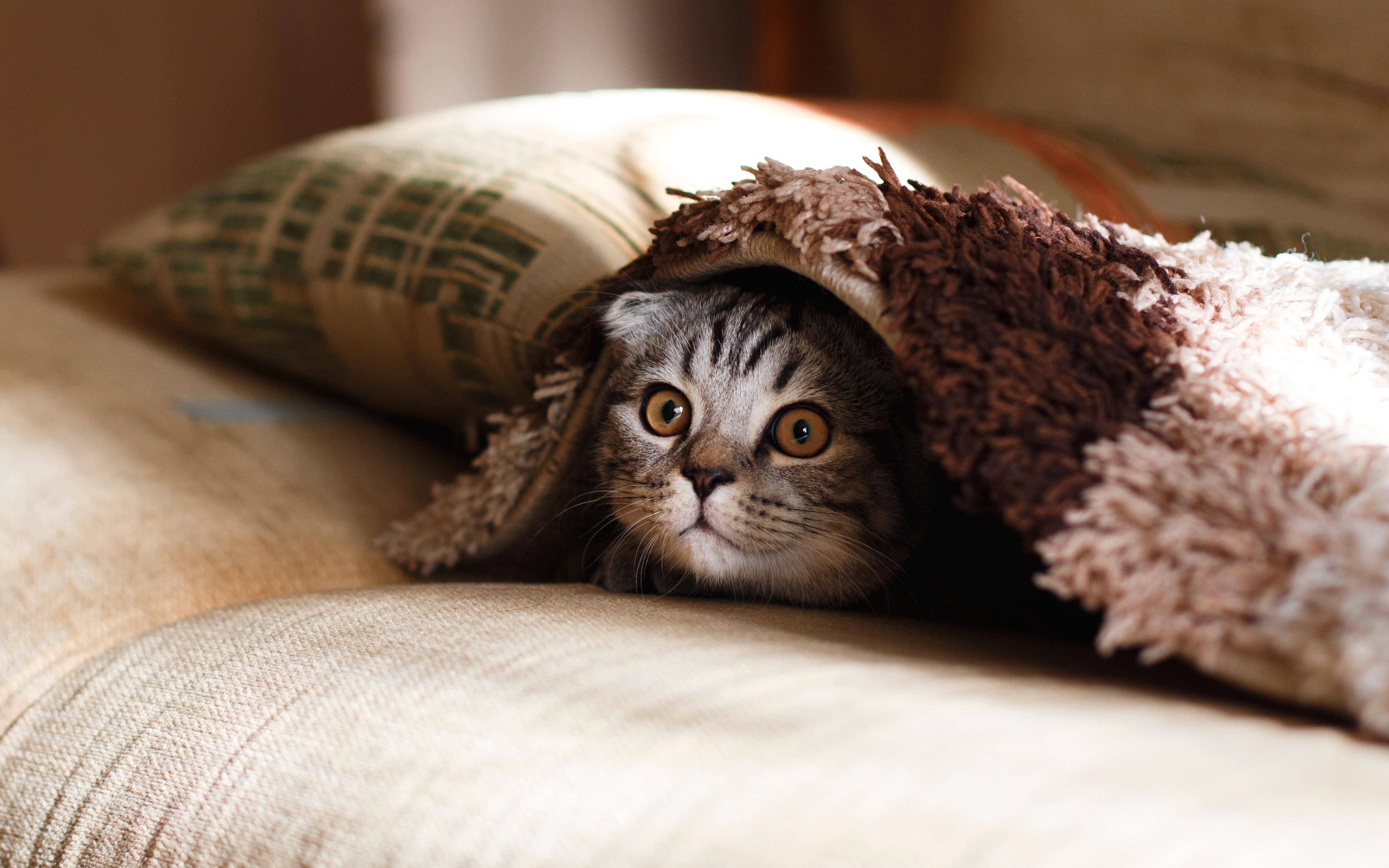 pisică cum să faci bani)
